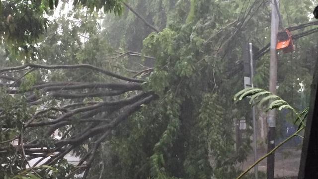 Pohon Tumbang di Kembangan Timpa Rumah Warga (263598)
