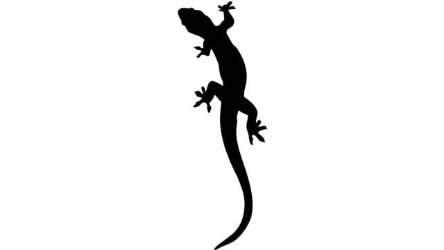 6 Hewan Ini Bisa Jadi Penanda Kehadiran Makhluk Halus di Sekitar Kamu (509656)