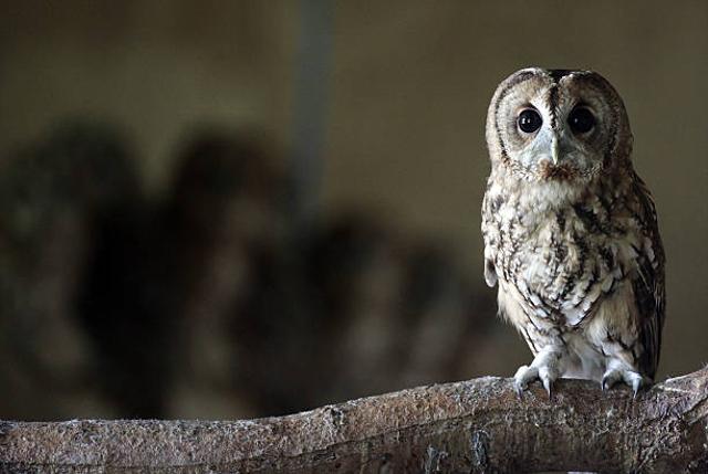6 Hewan Ini Bisa Jadi Penanda Kehadiran Makhluk Halus di Sekitar Kamu (509660)