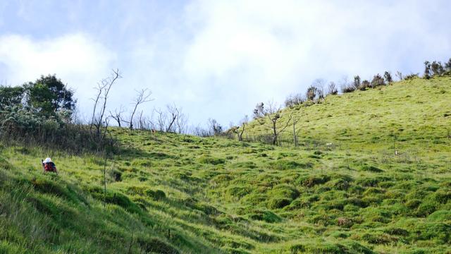 Mengintip Kembali Thekelan, Jalur Pendakian Tertua Merbabu (Bagian 2) (11199)