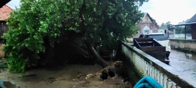 Pohon Tumbang serta Bangunan Rusak akibat Puting Beliung di Ogan Ilir dan OKU (585036)