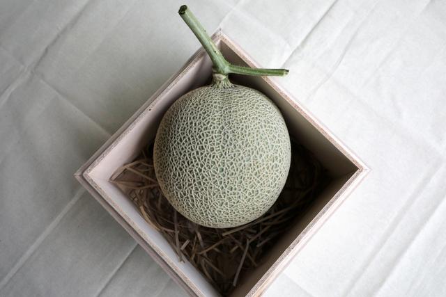 Foto: Petani Malaysia Berhasil Kembangkan Buah Termahal: Melon Jepang (871921)
