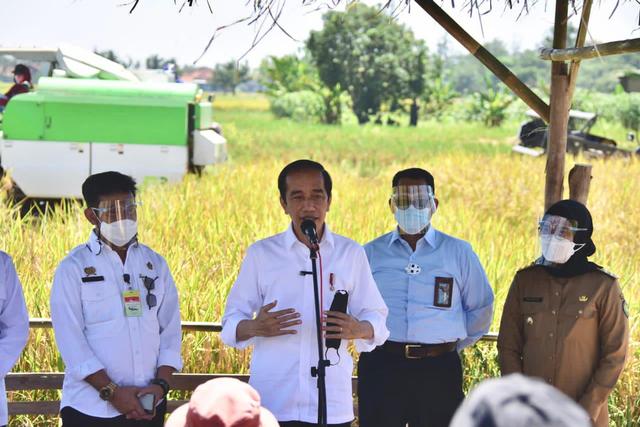 Presiden Jokowi Senang Produktivitas Padi Tinggi dan Harga Gabah Naik (368958)