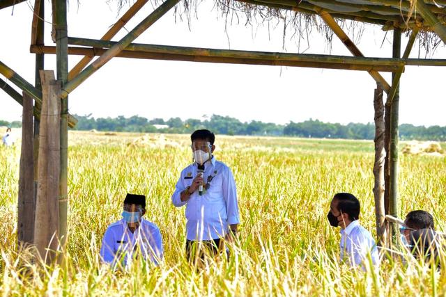 Jokowi Senang Produktivitas Padi Tinggi dan Harga Gabah Petani Naik (49300)
