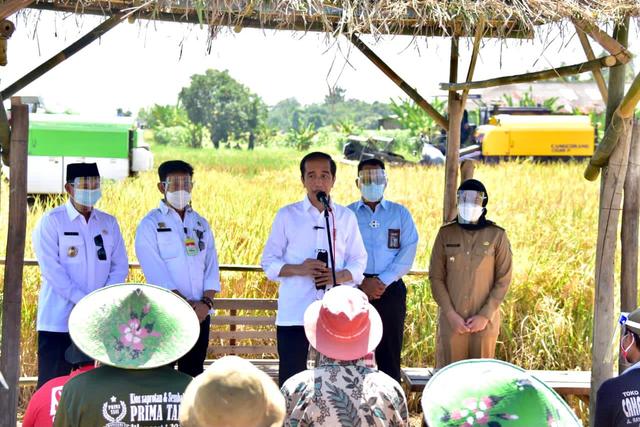 Jokowi Senang Produktivitas Padi Tinggi dan Harga Gabah Petani Naik (49297)