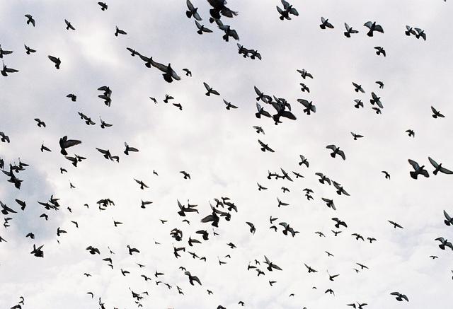 Mitos Burung Pipit Pembawa Kabar (378968)