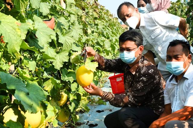 Hari Ini, Agrowisata Melon Unila Resmi Dibuka untuk Masyarakat Umum (333927)