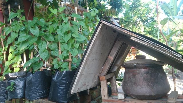 Budidaya Madu Klanceng, Bisnis yang Mengandalkan Keanekaragaman Tanaman Bunga (205637)