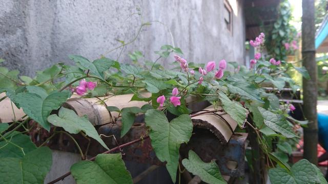 Budidaya Madu Klanceng, Bisnis yang Mengandalkan Keanekaragaman Tanaman Bunga (205639)
