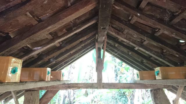 Budidaya Madu Klanceng, Bisnis yang Mengandalkan Keanekaragaman Tanaman Bunga (205640)