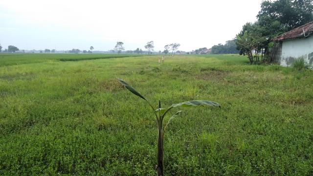 Peran Hakim Tata Usaha Negara dalam Konflik Agraria di Indonesia (442196)