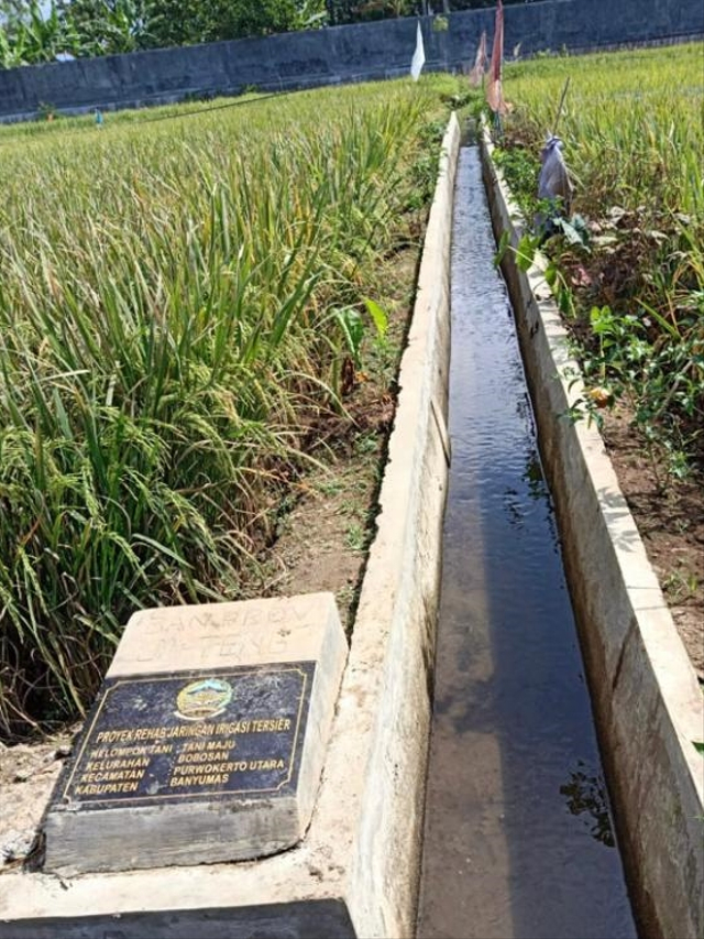 Tingkatkan Produksi Padi, Kementan Rehabilitasi Irigasi Tertier di Banyumas (303243)