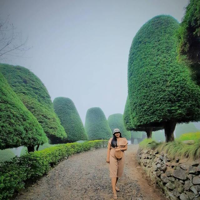 Menilik Bukit Jamur Ciwidey, Tempat Wisata Kekinian nan Instagramable di Bandung (107160)
