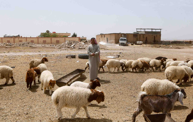 Foto: Dampak Konflik di Suriah bagi Peternak di Pedesaan (233896)