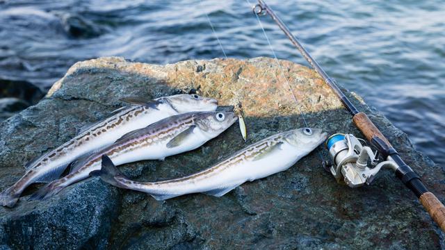 Bukan Salmon, Kata Ahli Diet Ini Jenis Ikan Paling Enak dan Sehat (441)