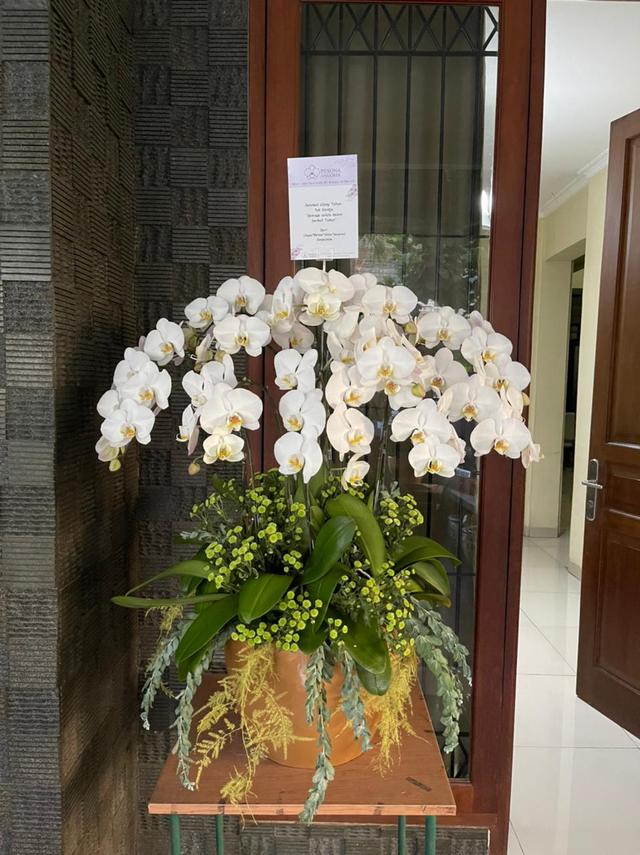 Hadiah Anggrek Putih untuk Ulang Tahun ke-61 Ventje Suardana (86449)