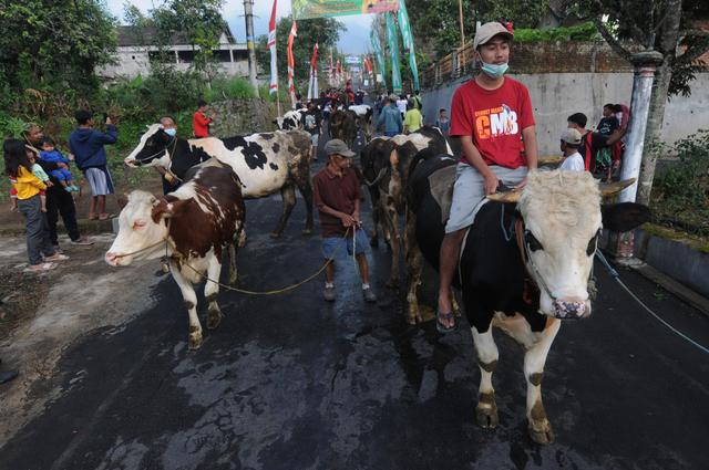 Lebaran Sapi, Tradisi Unik Arak-arakan Hewan Ternak Warga Lereng Gunung Merapi (1102677)