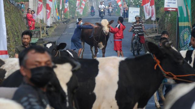 Lebaran Sapi, Tradisi Unik Arak-arakan Hewan Ternak Warga Lereng Gunung Merapi (1102675)
