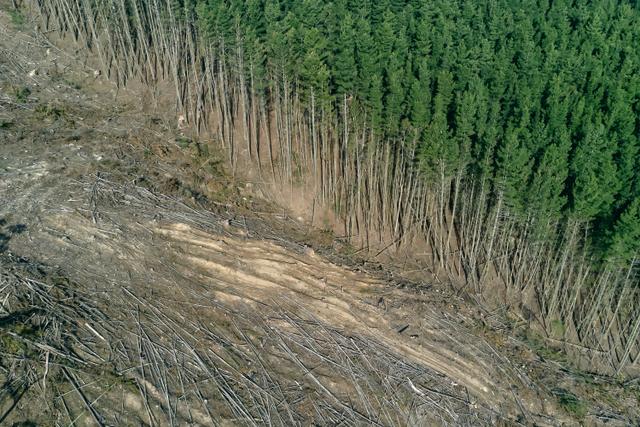 Penebangan Hutan Secara Liar, Begini Dampaknya (1057416)