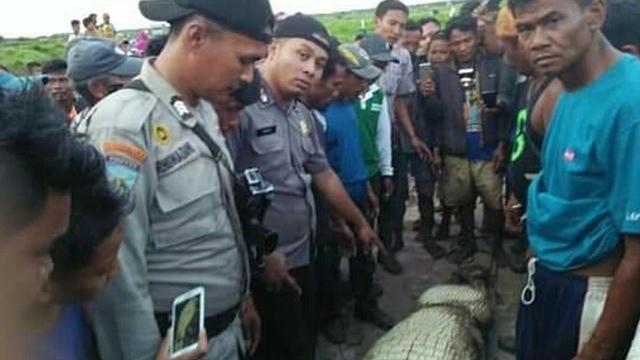 Viral, Buaya Sepanjang 4 Meter Melintasi Jalan Perkebunan Sawit di Riau (274240)