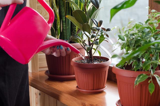 Tips Jaga Kualitas Udara untuk Cegah Penyebaran Virus di Rumah (56887)