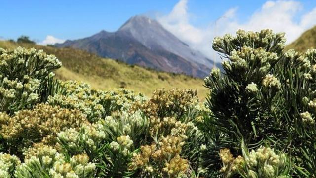 Setahun Ditutup, Gunung Merbabu dalam Kondisi Terindah untuk Didaki (9650)