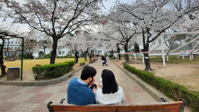 Lokasi Terbaik Melihat Sakura Mekar di Seoul, Korea Selatan (592799)
