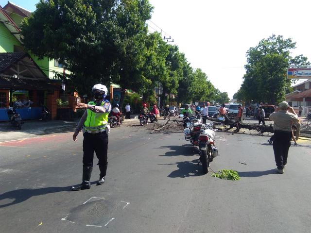 Polisi Atur Lalu Lintas Dilokasi Penebangan Pohon (264249)