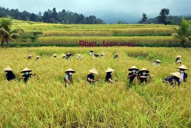 Produktivitas Pertanian Bali Meningkat Berkat Alsintan, Biaya Produksi Hemat (300407)
