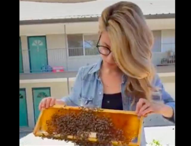 Tanpa Alat Pelindung Khusus, Wanita Ini Spesialis Memindahkan Lebah (470946)