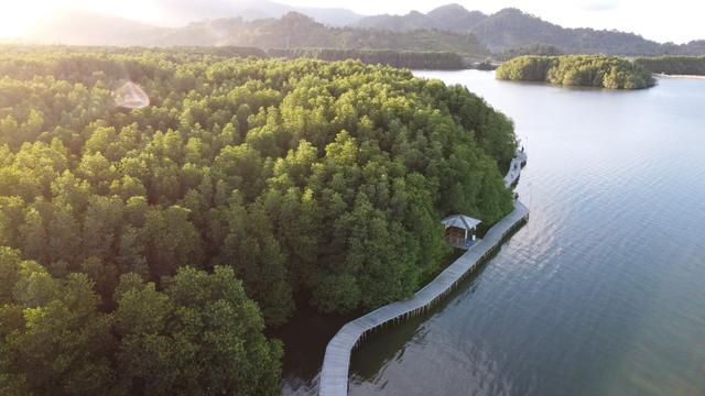 5 Hal yang Bisa Dinikmati di Ekowisata Mangrove Petengoran Pesawaran, Lampung (168434)