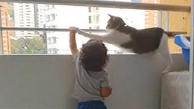 Viral, Kucing Protektif Ini Cegah Anak Kecil Mendekat ke Ujung Balkon (29015)