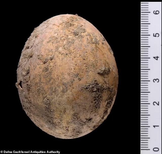 Israel Temukan Telur Ayam Usia 1.000 Tahun dari Periode Islam, Awet Sempurna (410)