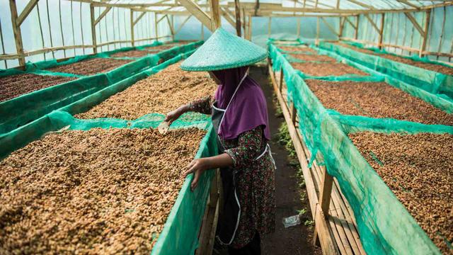 Foto: Melihat Aktivitas Petani di Puntang Kopi di Kabupaten Bandung (124013)