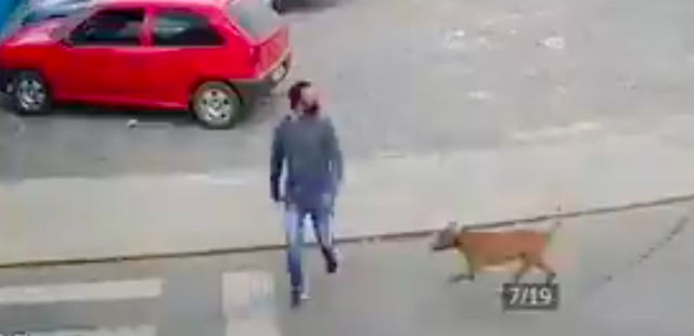 Sedang Menyeberang Jalan, Pria Ini Terjatuh Akibat Ditabrak Anjing (103945)