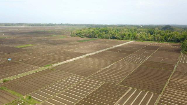 Food Estate adalah Keniscayaan Bagi Negara Agraris (336750)