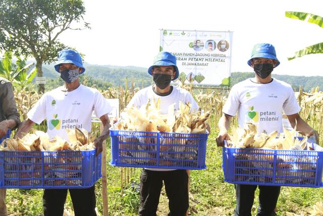 Dukung Petani Jagung, bank bjb Bantu Permodalan Melalui KUR Petani Milenial (24415)