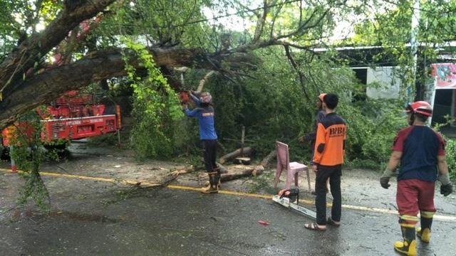 Seorang Petugas Damkar di Wajo, Sulsel, Tewas Tertimpa Pohon Tumbang (5843)