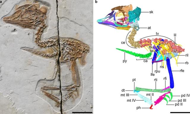 Fosil Burung (Serupa) T-Rex Ditemukan, Usianya 120 Juta Tahun