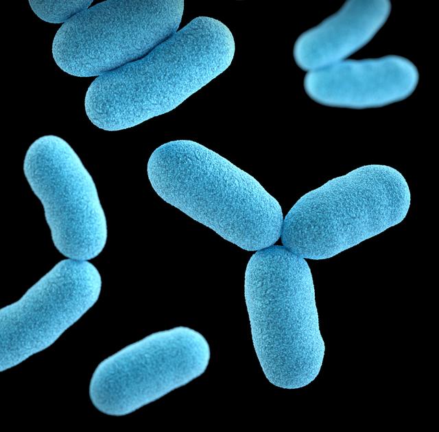 Contoh Bakteri yang Menguntungkan bagi Kesehatan Manusia (648832)