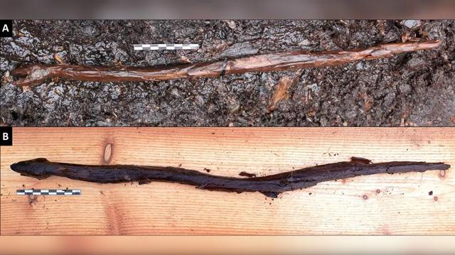 Tongkat Ular Berusia 4.400 Tahun Diduga Milik Dukun Finlandia Ditemukan (73566)