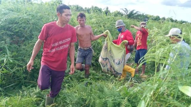 Petani di Dumai Tewas Mengenaskan Diterkam Harimau Sumatera (58613)