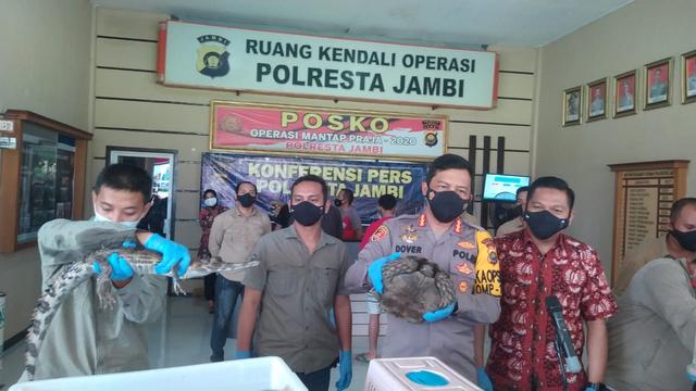Pelihara Kura-kura hingga Buaya, Seorang Warga Kota Jambi Ditangkap Polisi (364079)