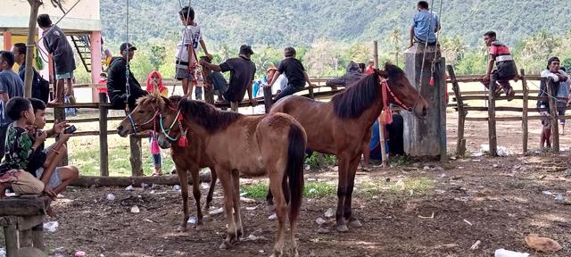 Budaya Pacoa Jara di Dompu: Keberanian Joki Cilik Membawa Kuda Pacu (193347)