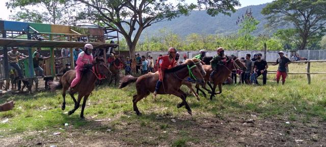 Budaya Pacoa Jara di Dompu: Keberanian Joki Cilik Membawa Kuda Pacu (193348)