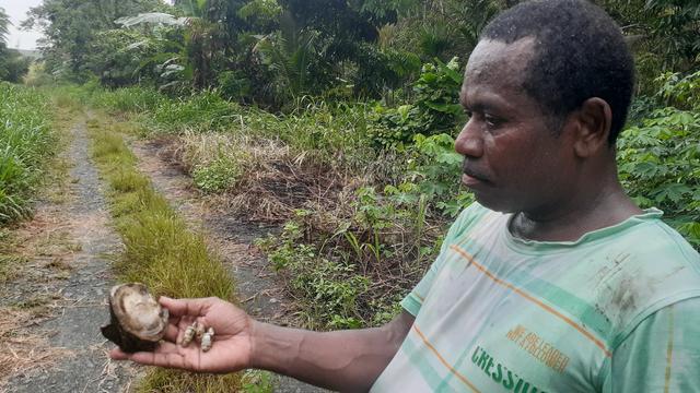 Fosil Kerang Laut Ditemukan di Danau Love Sentani Papua (51646)