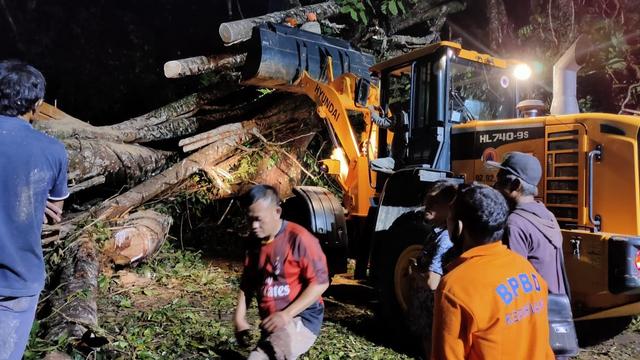 2 Warga Tewas Tertimpa Pohon Tumbang di Bengkulu (13025)