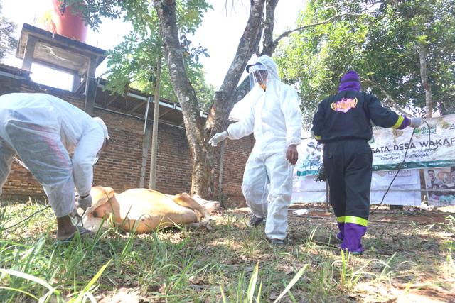 Inovasi Kurban di Masa PPKM Darurat dan Pandemi Covid-19 (51812)