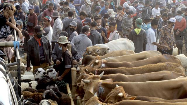 Foto: Ngeri-ngeri Sedap Kerumunan di Pasar Hewan Jonggol saat PPKM Darurat (895)