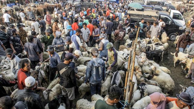 Foto: Ngeri-ngeri Sedap Kerumunan di Pasar Hewan Jonggol saat PPKM Darurat (897)